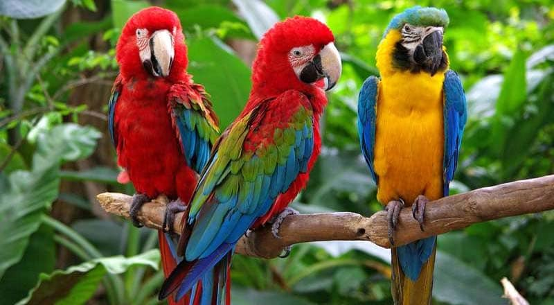 can parrot really talk, does parrot really talk, parrot really talk, parrot really talking, parrot talking, parrot talking in tamil, parrot talking video, parrot talking voice, parrot talking in hindi, parrot talking in tamil video, parrot talking training in tamil, parrot talking sounds, parrot talking price, parrot talking mummy, parrot talk, parrot talk youtube, parrot talking malayalam, parrot talking youtube, parrot talking download, parrot talking hindi, parrot talking tamil, parrot talking video download, parrot talking mp3 download, parrot talking sound, parrot talk magazine, parrot talks like matthew mcconaughey, parrot talking to alexa, parrot talks to babies, parrot talking about squirrel, parrot talking funny image, parrot talking toy, parrot talking training, parrot talking cd, parrot talking walking, parrot talking treatment, parrot talking trainer